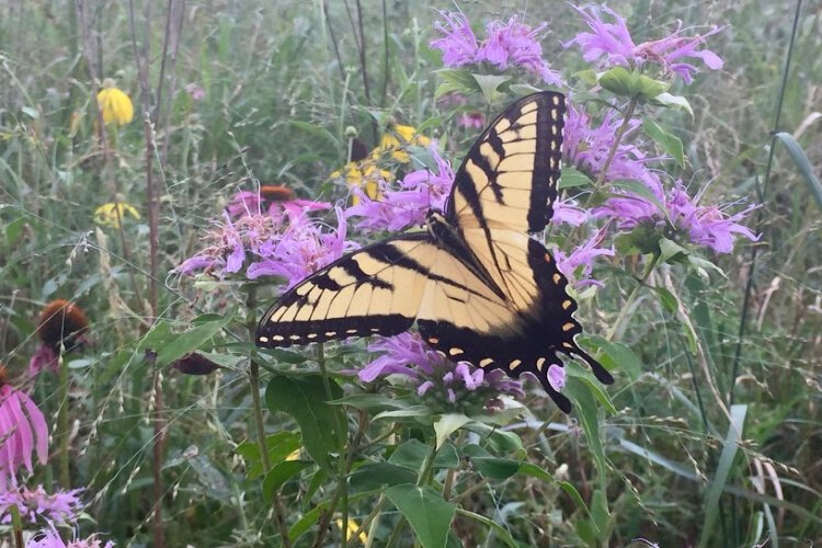 NKU is working with area schools to expand habitat for bees and butterflies.