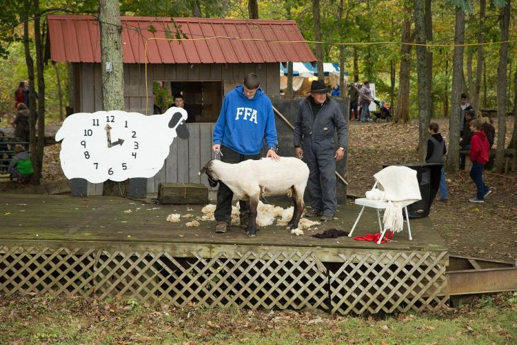 Pendleton County has a long tradition of wool and sheep shearing.